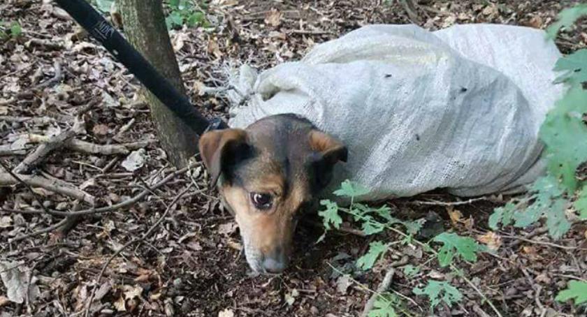 Zwierzęta, Poznajecie Został znaleziony worku przywiązany lesie [ZDJĘCIA] - zdjęcie, fotografia