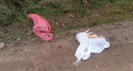 Białołęka: martwy pies znaleziony w reklamówce na drodze [ZDJĘCIA]